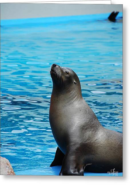 Recently Sold -  - California Sea Lions Greeting Cards - Sea Lion Greeting Card by Thea Wolff