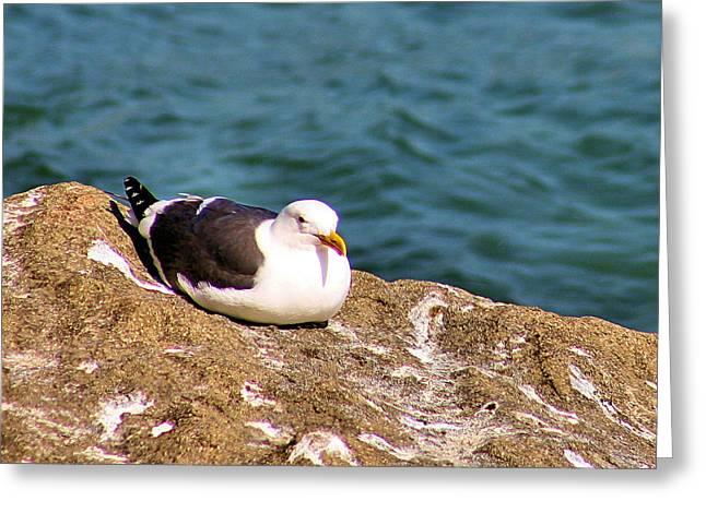 Docked Sailboats Greeting Cards - Seagull Morro Bay California Greeting Card by Bill Mollet