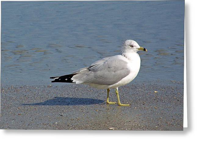Seagull On The Beach Greeting Card by Patricia Taylor