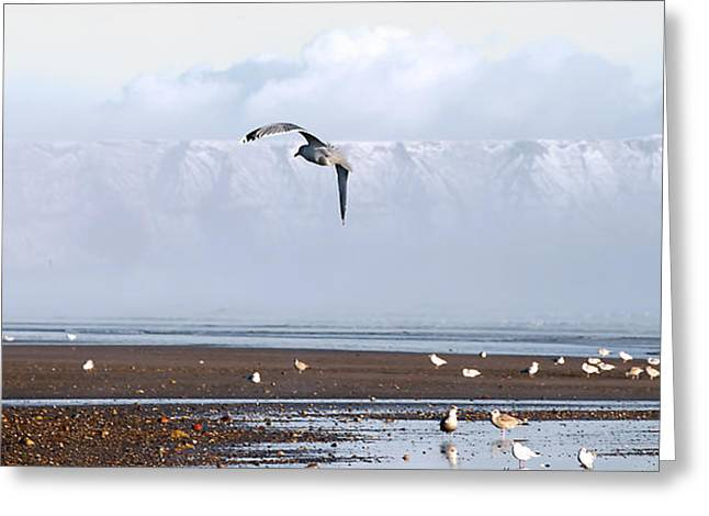 Flying Seagull Greeting Cards - Seagull Greeting Card by Svetlana Sewell