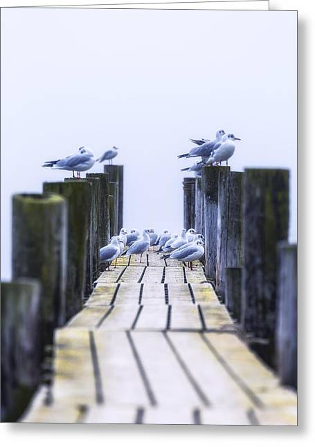 Seagulls Greeting Card by Joana Kruse