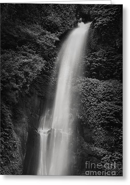Black And White Waterfall Greeting Cards - Sekumpul Waterfall Greeting Card by Rod McLean