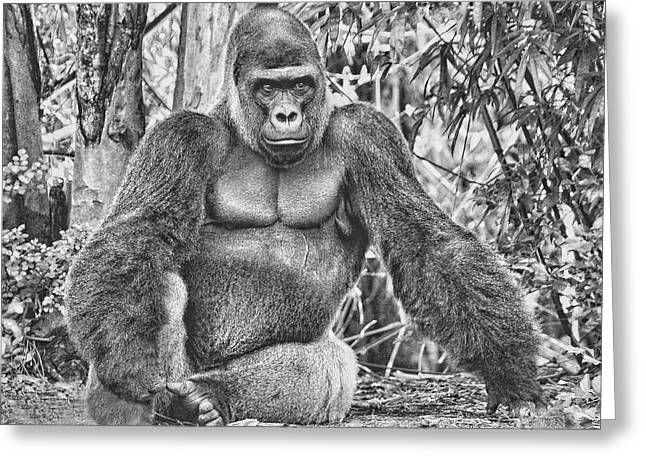 Ape. Great Ape Greeting Cards - Silverback Greeting Card by Larry Linton