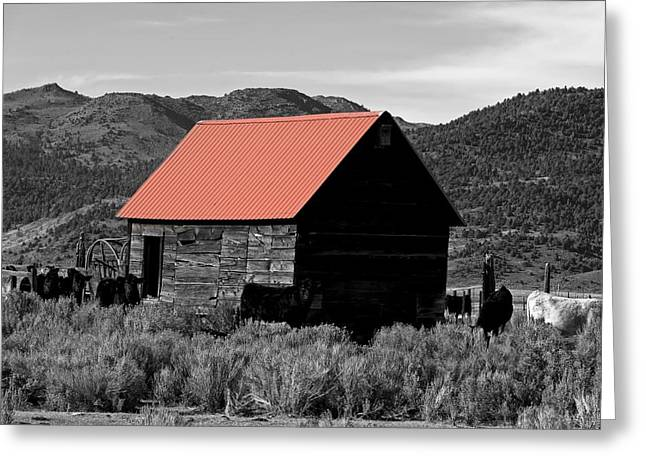 Red Roofed Barn Greeting Cards - Small Barn And Cattle - California Greeting Card by Mountain Dreams