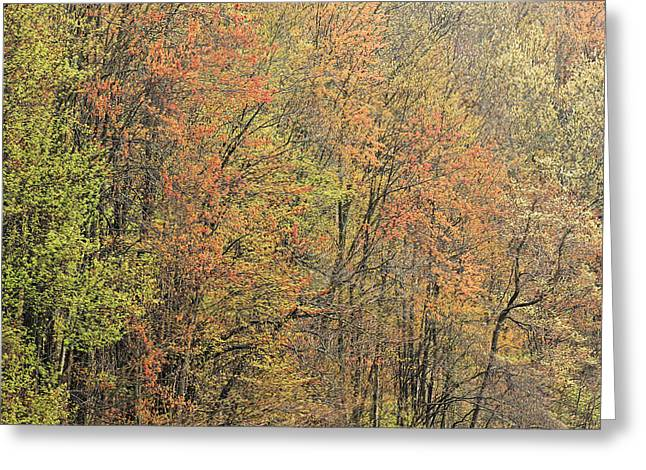 Dogwood Lake Greeting Cards - Spring Forest in Bloom Greeting Card by Dean Pennala