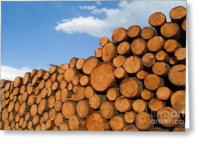 Problem Greeting Cards - Stack of wooden logs in the Landes forest Greeting Card by Sami Sarkis