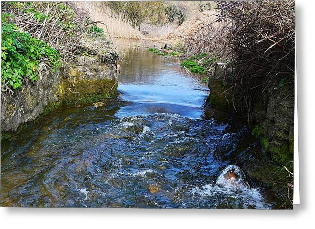 Day Lilly Greeting Cards - Stream to the Sea 2 Greeting Card by David G Bevan