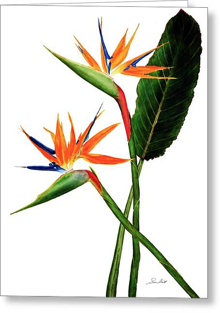 Strelitzia Paintings Greeting Cards - Bird of Paradise stems Greeting Card by Sue Sill