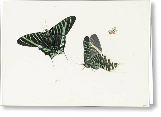 Studies Of Two Butterflies Greeting Card by Anton Henstenburgh