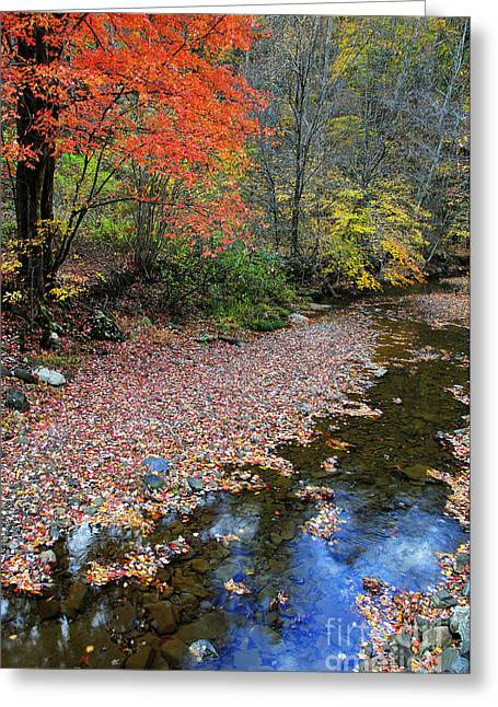 Thomas R. Fletcher Greeting Cards - Sugar Maple Birch River Greeting Card by Thomas R Fletcher