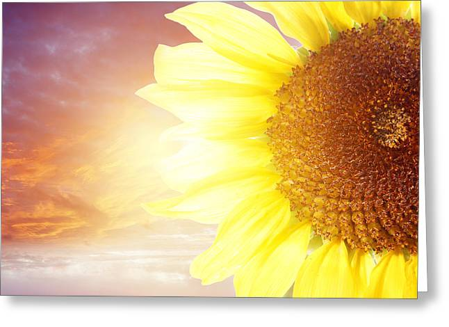 Beauty Greeting Cards - Sun flower Greeting Card by Les Cunliffe