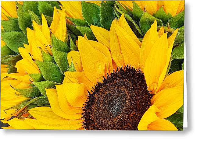 Bloosom Greeting Cards - Sunflowers  Greeting Card by Jasna Gopic