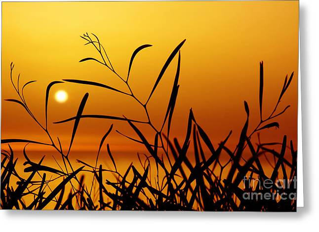 Backdrop Photographs Greeting Cards - Sunset Greeting Card by Carlos Caetano