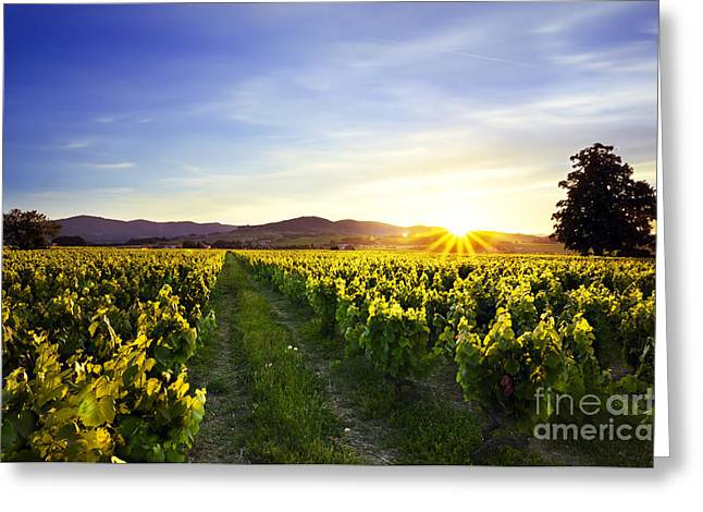 Gamay Photographs Greeting Cards - Sunset over vineyards of Beaujolais Greeting Card by Gael Fontaine