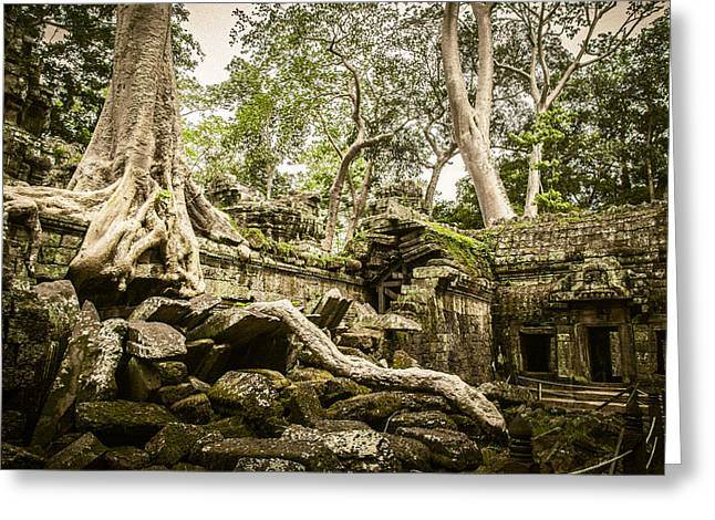Greeting Cards - Ta Prohm Greeting Card by Chas Hauxby