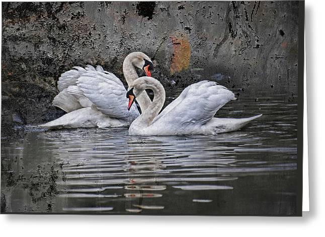 Tango Of The Swans Greeting Card by Joachim G Pinkawa