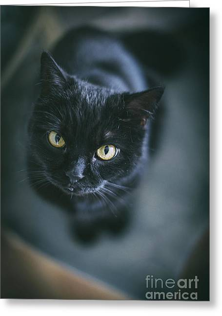 Black Top Greeting Cards - The cat Greeting Card by Anna Mutwil