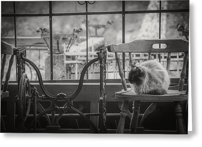 Old Stuff Greeting Cards - The Cat in the Antique Shop Greeting Card by David Marcu