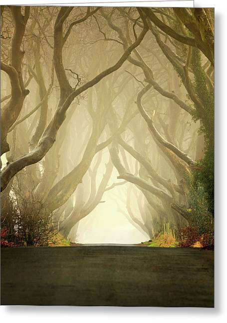 Ballymoney Greeting Cards - The Dark Hedges Greeting Card by Pawel Klarecki