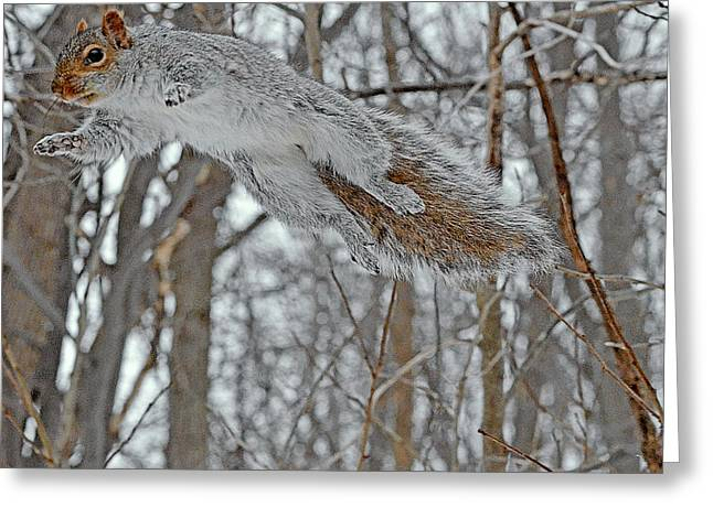The Flying Squirrel Greeting Card by Asbed Iskedjian