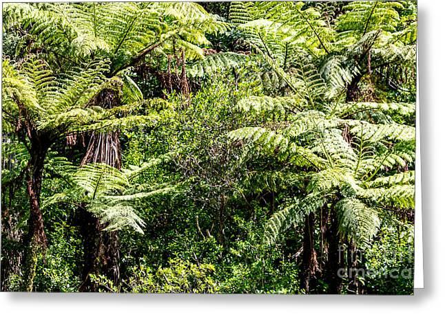 The New Zealand Native Bush. Fern Tree  Greeting Card by Mariusz Prusaczyk