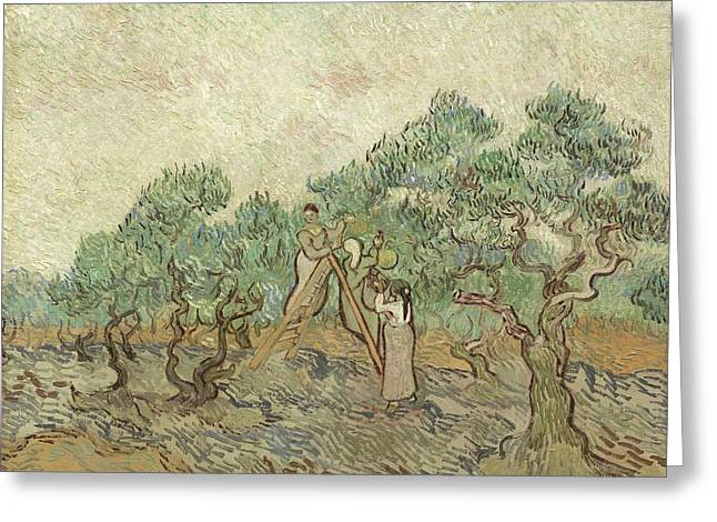 Fruit Tree Art Greeting Cards - The Olive Orchard Greeting Card by Vincent Van Gogh