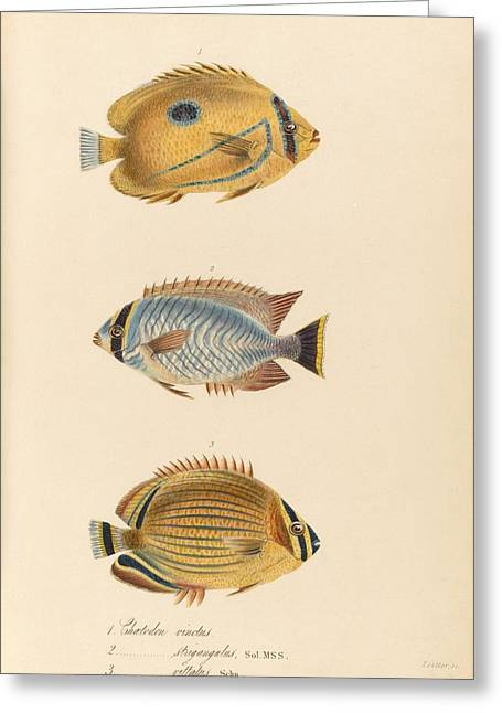 Zoology Paintings Greeting Cards - The zoology of Captain Beecheys voyage Greeting Card by Celestial Images