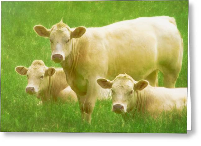 Innocence Greeting Cards - Three Cows in the Pasture Greeting Card by Hal Halli