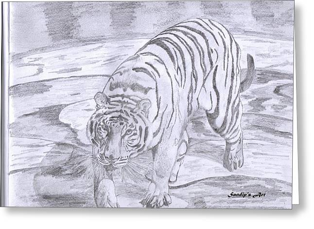 Wild Life Drawings Greeting Cards - Tiger  Greeting Card by Sandip Paul