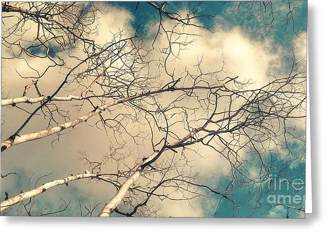 Bare Trees Greeting Cards - Tree Tops 5 Greeting Card by Priska Wettstein