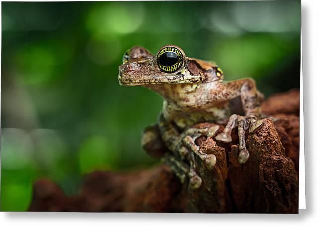Guyana Greeting Cards - Tropical Tree Frog Greeting Card by Dirk Ercken