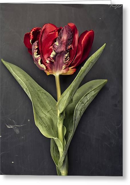Onions Greeting Cards - Tulip Greeting Card by Nailia Schwarz