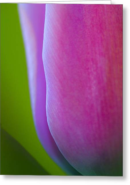 Decorativ Photographs Greeting Cards - Tulip Greeting Card by Silke Magino