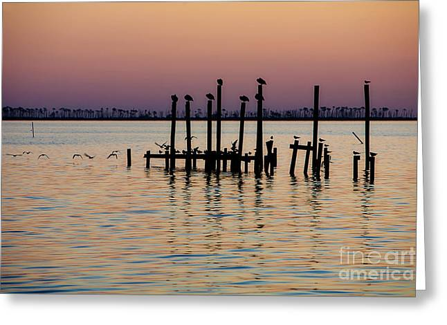 Biloxi Greeting Cards - Twilight Colors Greeting Card by Joan McCool