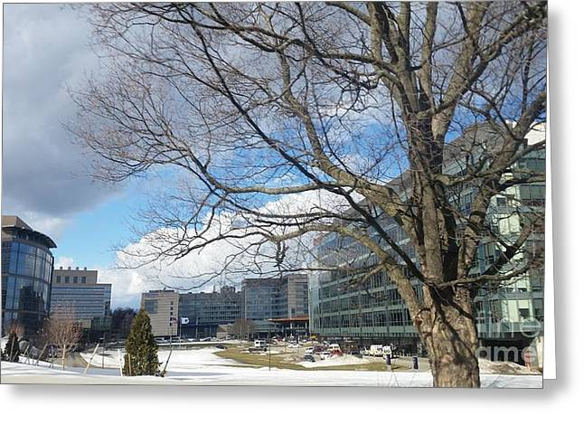 Umass Greeting Cards - Umass Medical Center Greeting Card by Rose Wang
