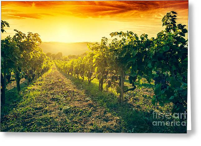 Vineyard In Tuscany, Italy Greeting Card by Michal Bednarek