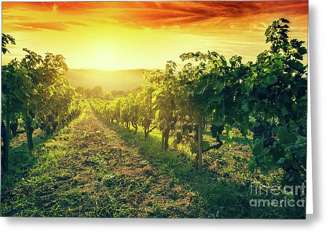 Vineyard In Tuscany, Italy. Wine Farm At Sunset. Vintage Greeting Card by Michal Bednarek