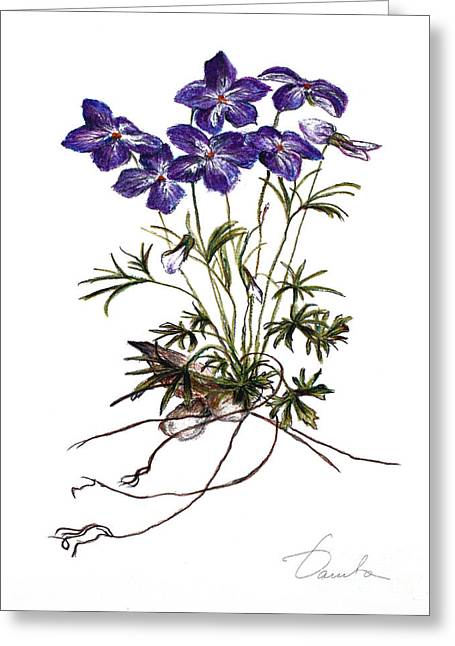 Fresh Green Drawings Greeting Cards - Violets Greeting Card by Danuta Bennett