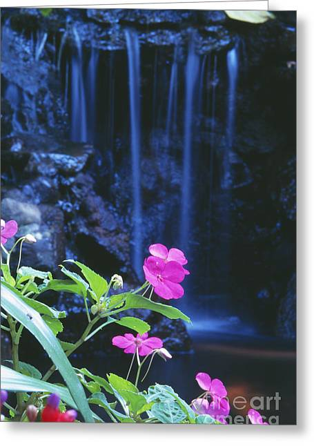 Waimea Valley Greeting Cards - Waimea Falls Park Greeting Card by Bill Brennan - Printscapes