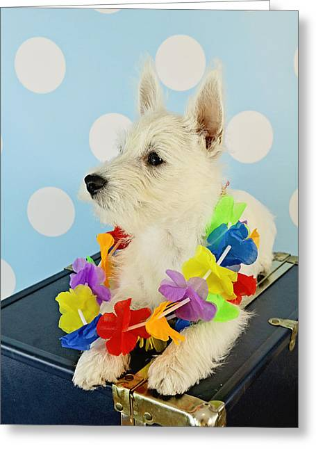 Princes Greeting Cards - Westie Greeting Card by Amanda Stadther