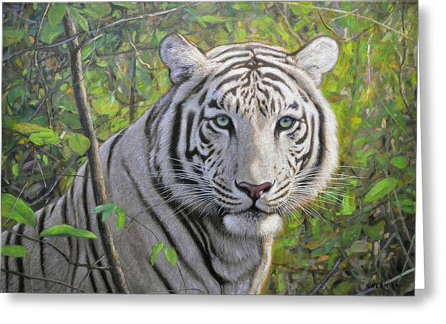 Childhod Greeting Cards - White tiger Greeting Card by Gabriel Hermida
