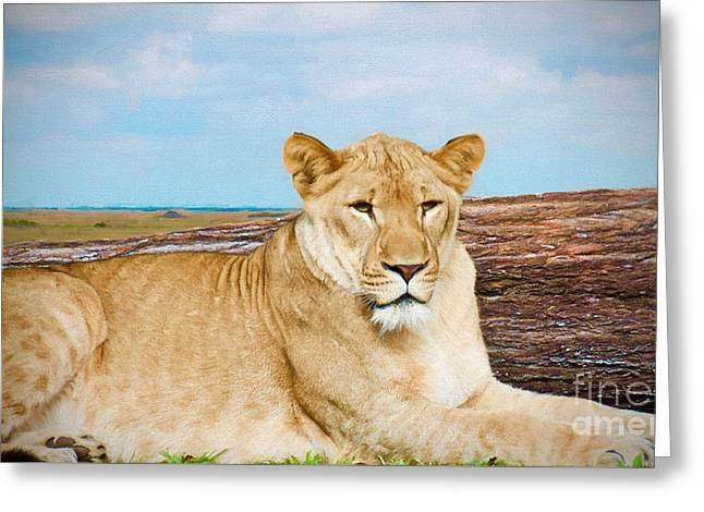 Wild One Greeting Card by Judy Kay