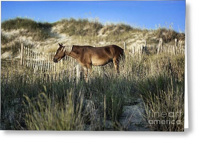 Wild Spanish Mustang Greeting Card by John Greim