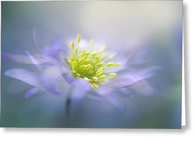Anemones Greeting Cards - Windflower Greeting Card by Jacky Parker