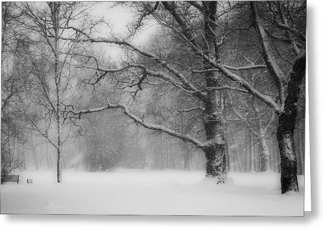 Snowstorm Greeting Cards - Winter in Estonia Greeting Card by Vilve Roosioks