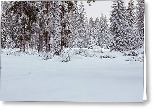 Winter Snowstorm In The Lake Tahoe Greeting Card by Panoramic Images