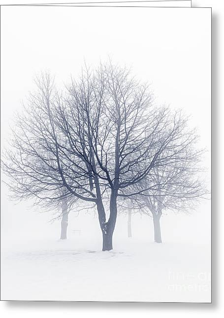 Frosty Greeting Cards - Winter trees in fog Greeting Card by Elena Elisseeva