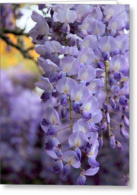 Vine Leaves Greeting Cards - Wisteria Blossom Greeting Card by Jessica Jenney