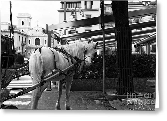 Horse And Buggy Greeting Cards - You Looking At Me Greeting Card by John Rizzuto