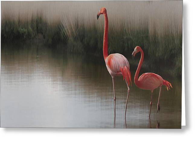 Fauna Photographs Greeting Cards - ... Greeting Card by Anna Cseresnjes
